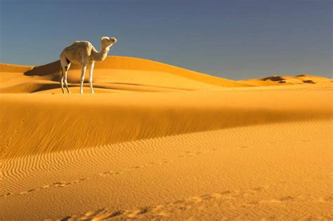 A Perfect Morocco Family Vacation Package   Zicasso