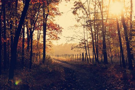Nature Backgrounds | 17 best free background, leafe, fall