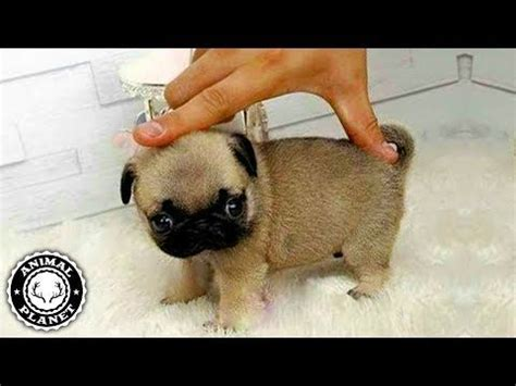 Baby Dogs 🔴 Cute and Funny Dog Videos Compilation (2018